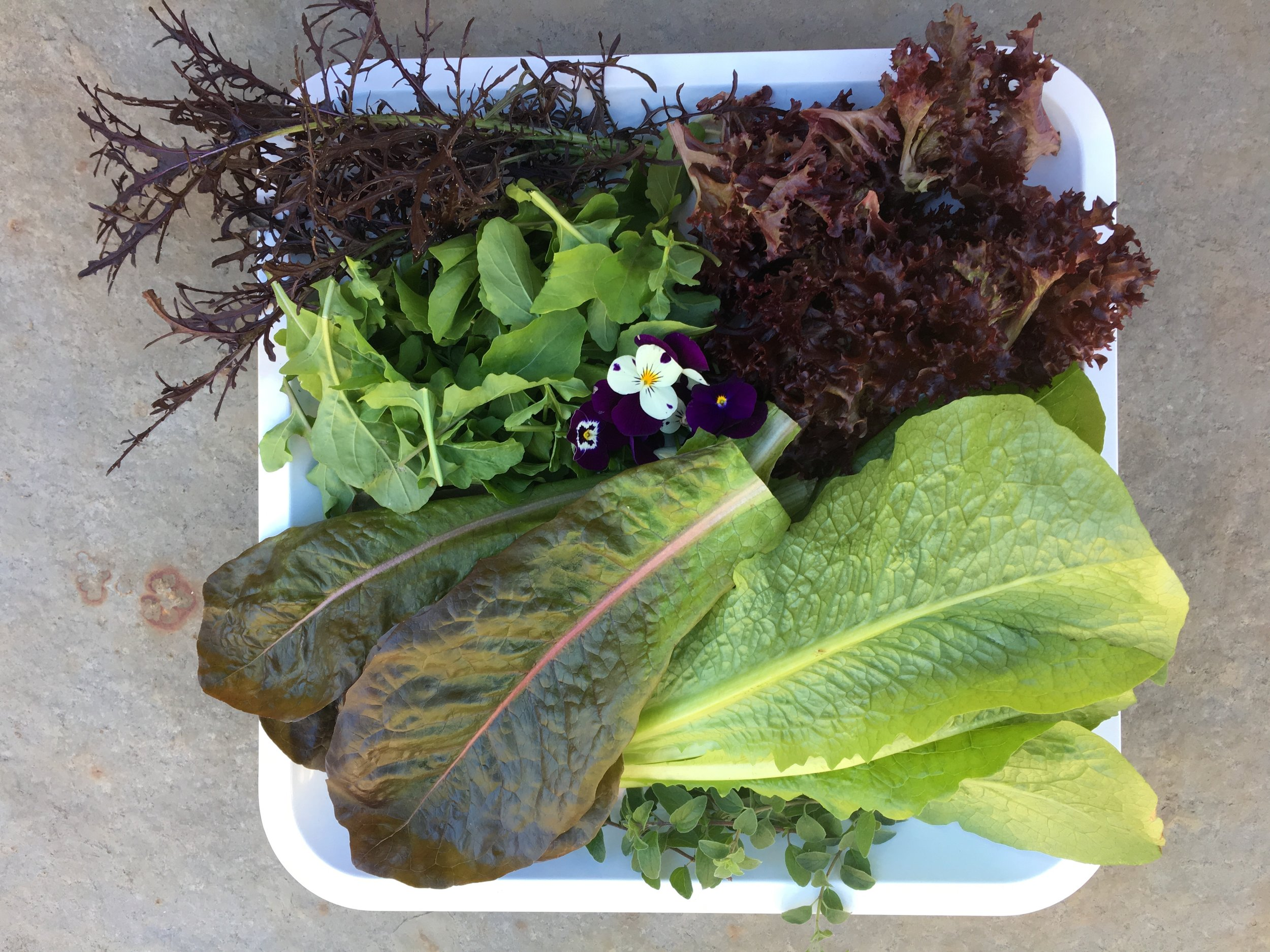 Gifts of greens