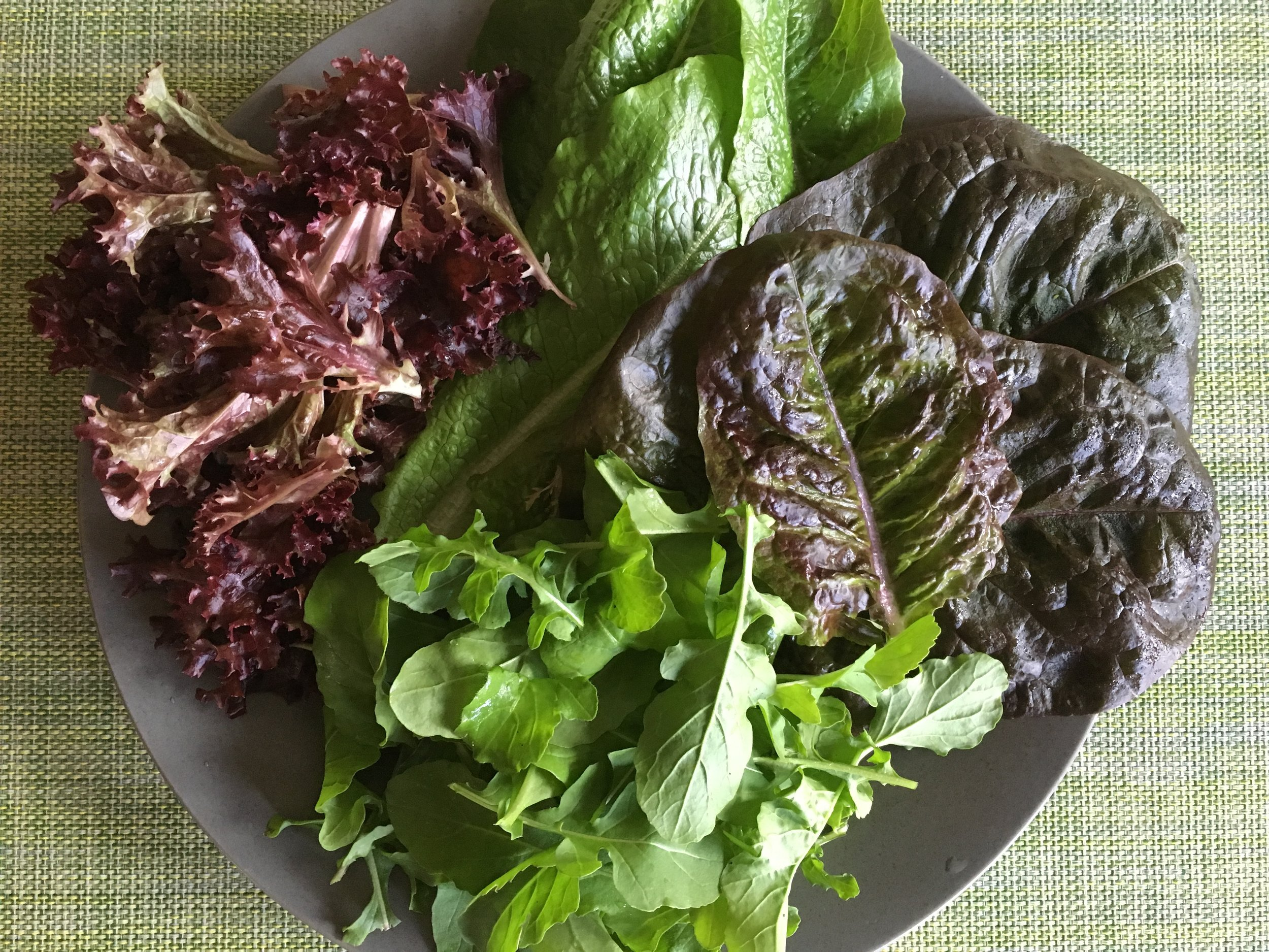 Various lettuces and arugula for a dinner salad.
