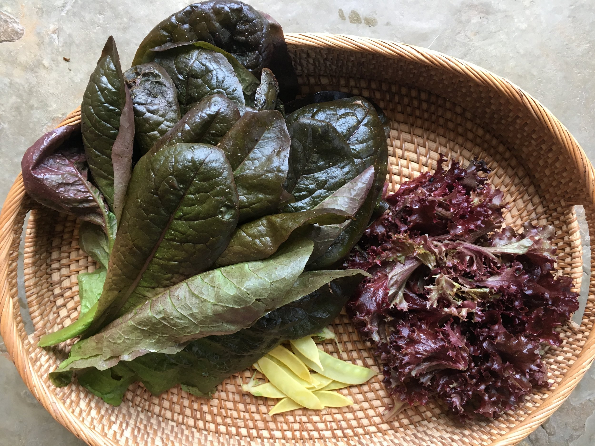 Red romaine and rosso losso lettuce—garden gifts for a friend.