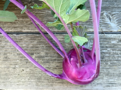 Kohlrabi—more magenta for my garden