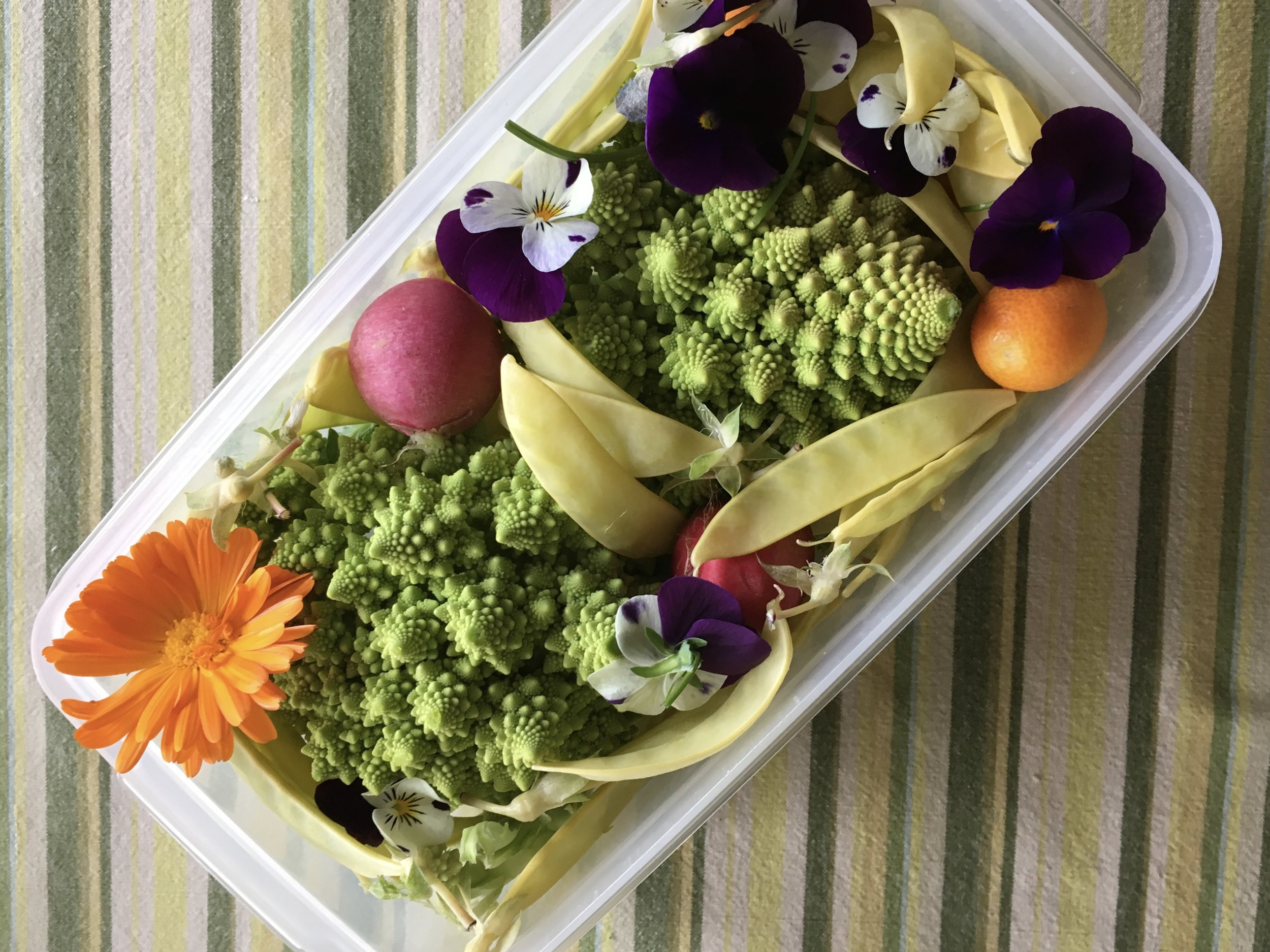 Here's a container of garden goodness I packed in my suitcase for my trip to the Pacific Northwest. Most every time I travel with veggies and fruit in my suitcase, TSA wants to take a look.