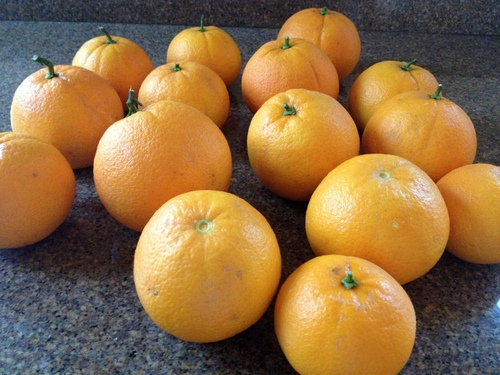 EG Oranges 2-18-13.JPG