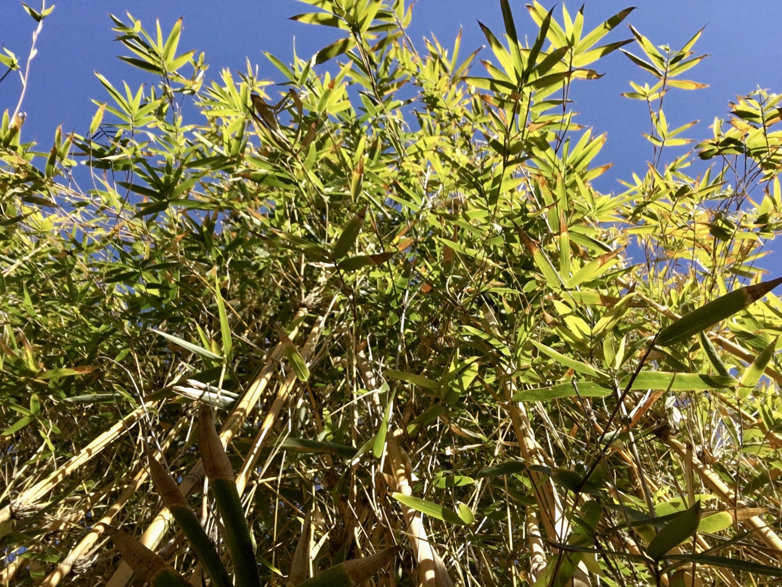 Bamboo screen in my backyard.