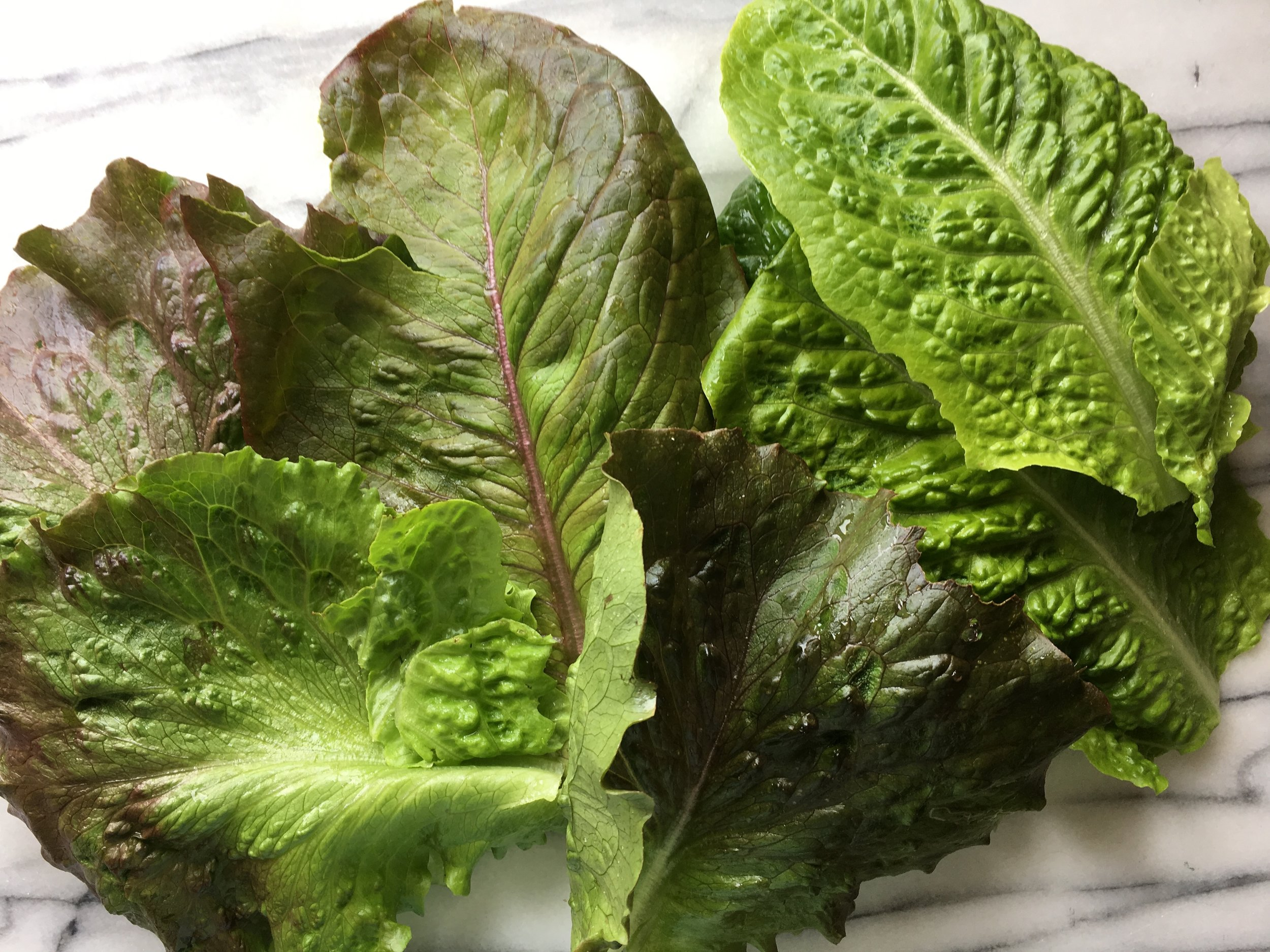Here's what I gathered for a salad last night—'Jericho,' 'Cimarron' and lettuce from a summer mix.