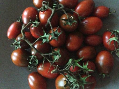 EG Black Cherry Explosion Tomatoes.JPG