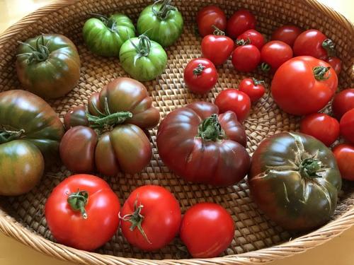 EG tomatoes 2017.JPG