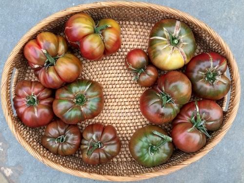 Heirloom tomatoes 8-12-17.JPG