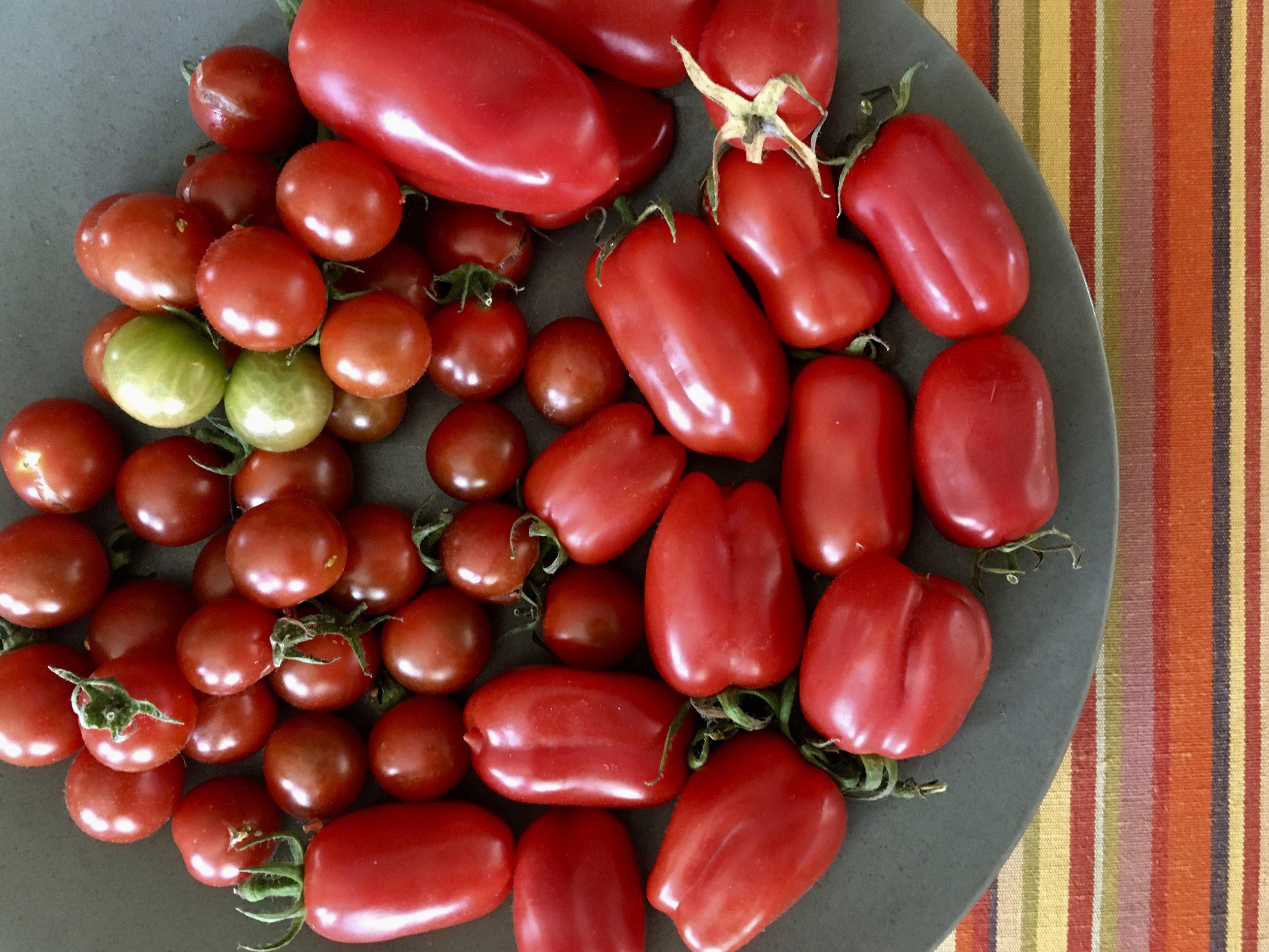 'Black Cherry' and 'San Marzano' tomatoes