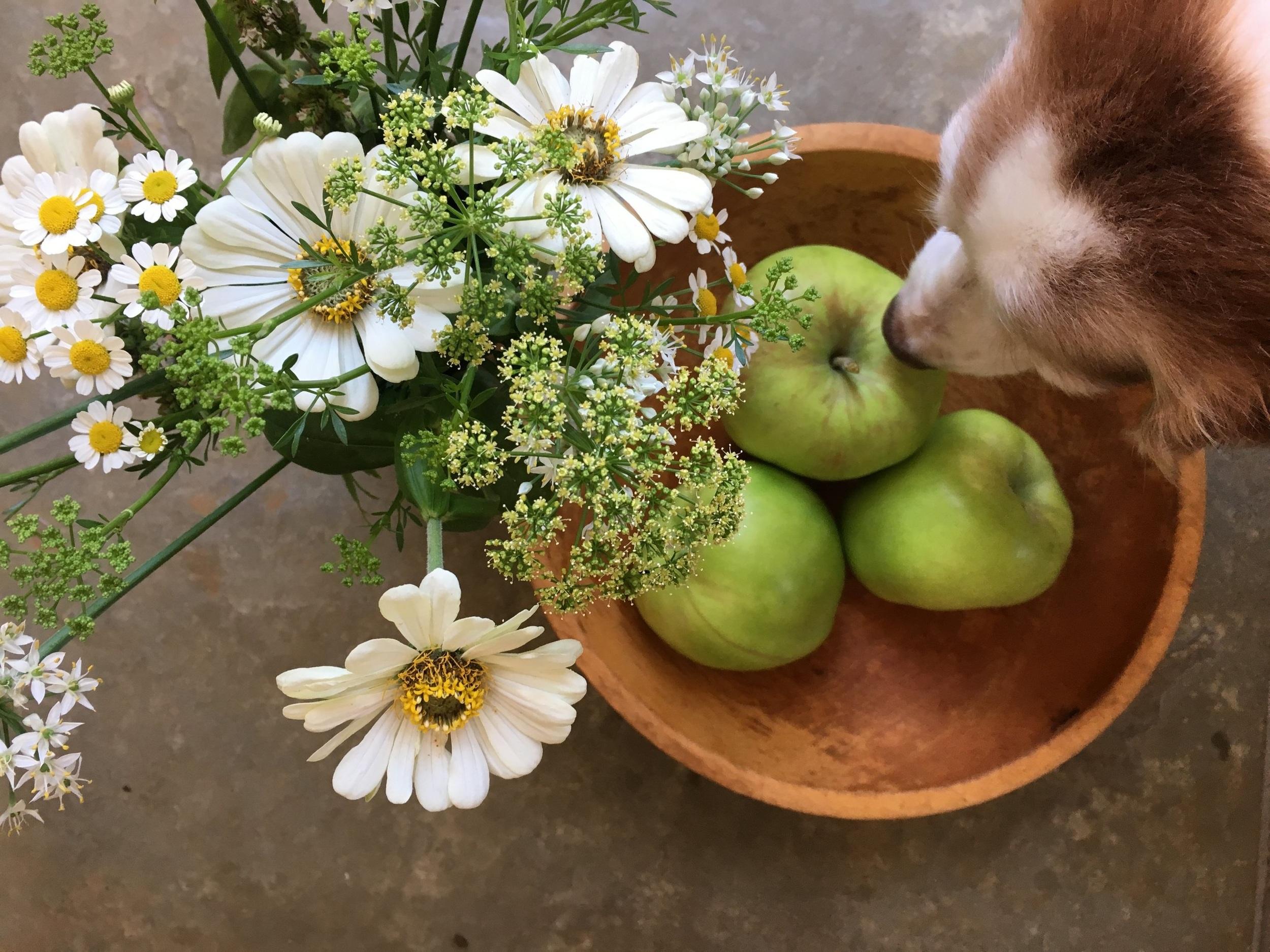 Zinnias, garlic chives, feverfew, parsley and oregano flowers.