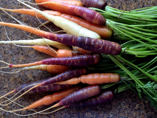 Tricolor carrots 'Circus Circus' from  Renee's Garden