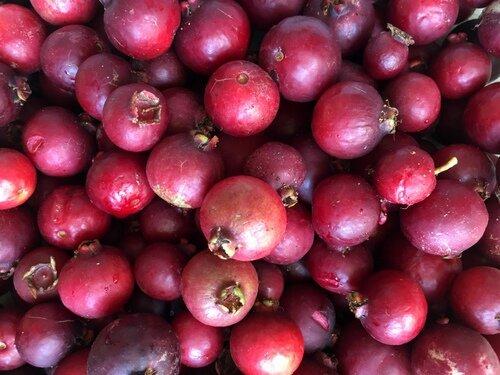 EG First guavas 8-10-16 (8#).JPG