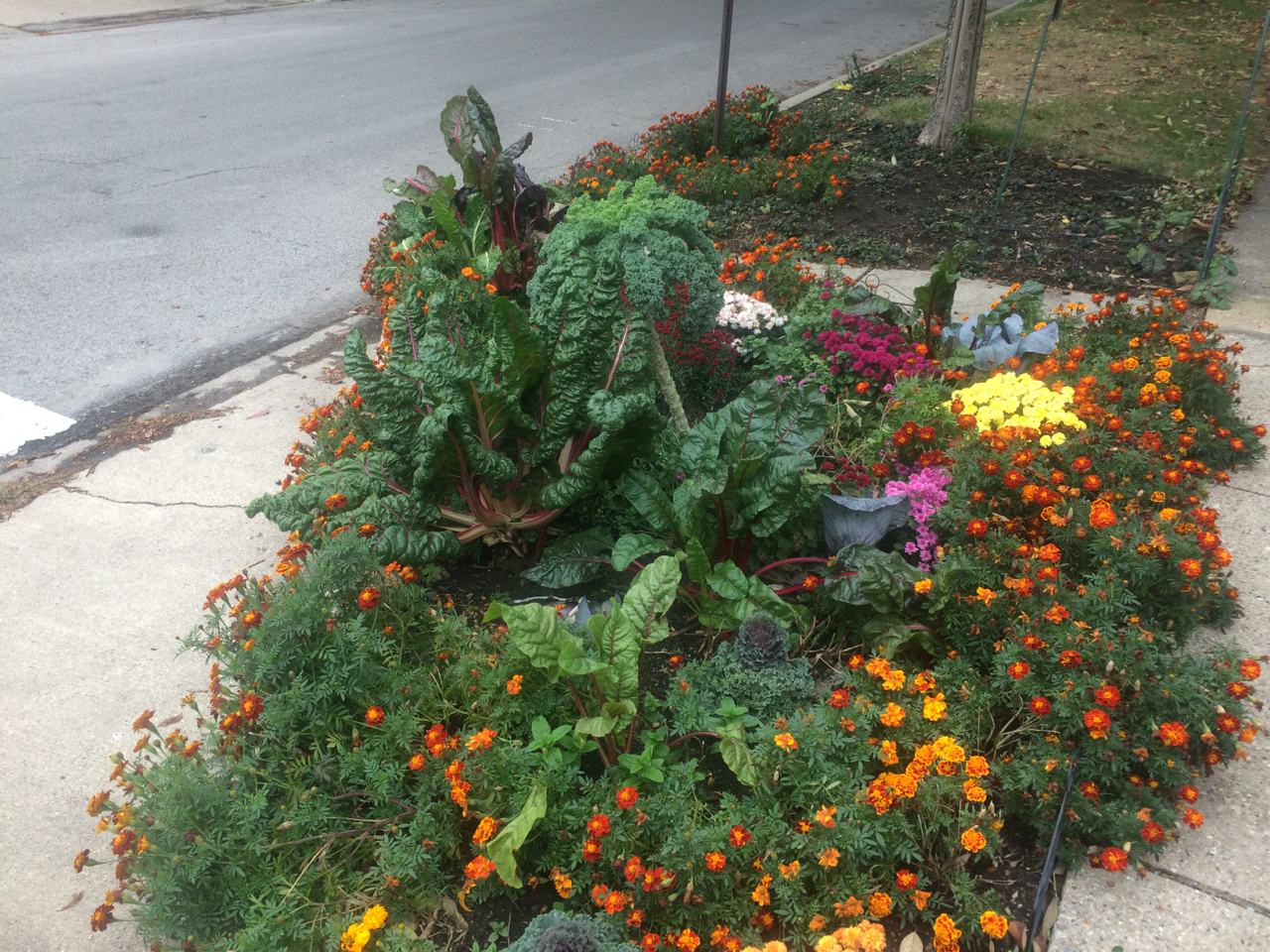 Did your landscape beautify the area, provide cutflowers, or fulfill whatever purpose you wanted?