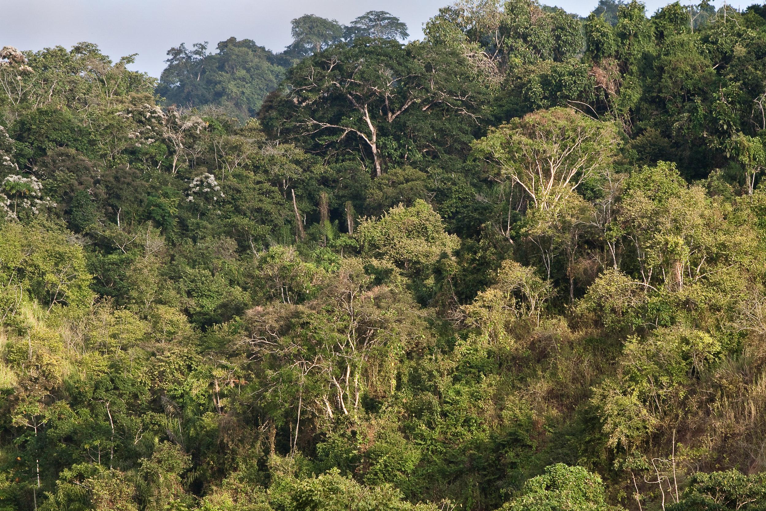 Beautiful-landscape-of-a-ceibo-tree-forest-in-Manabi,-Ecuador-475218298_2598x1732.jpeg