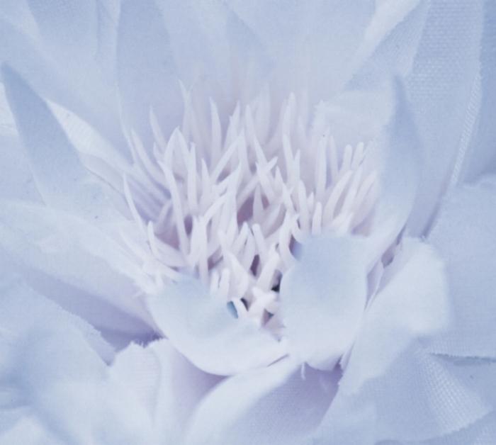 Flower - Image Liz Gill