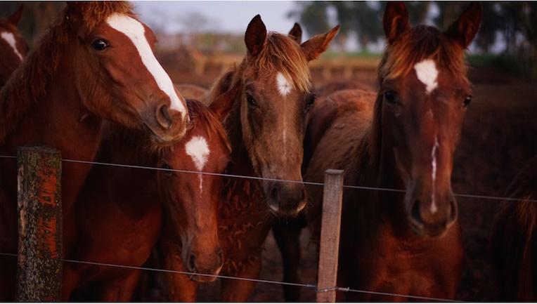 Stella Artois - Horse Whisperer