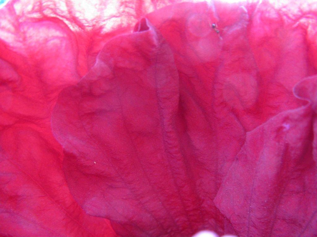 Hibiscus petal