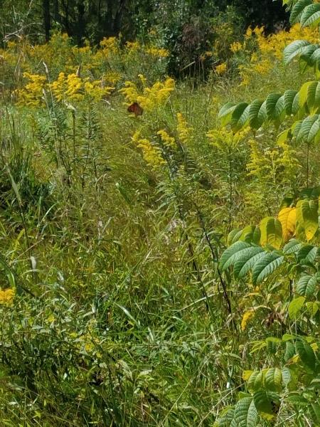 Meadow -