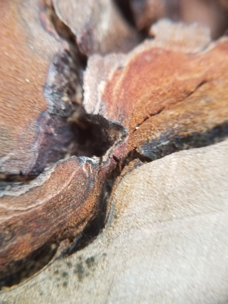 - This is a 'get close' picture rather than a zoomed picture…of the edge of a rotting stump. I liked the curves and the colors.