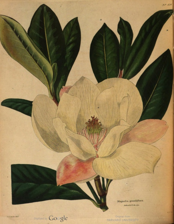 - Welcome to my listing/collection of free eBooks that contain botanical prints! I initiated the section of my site in January 2018 and will continue to add new items as I mine the botanical books I read in years past and find new eBooks with botanical content. Subscribe to the blog for this section (Botanical Blog) to receive updates as new material is posted.