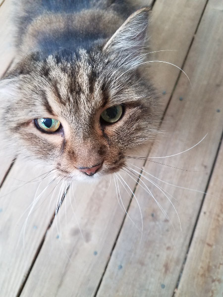 - I carried my tools up to the covered deck after I was finished and awakened the cat that was enjoying a morning nap there. He seemed more curious than grumpy!