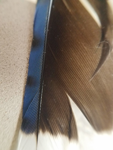 - Blue Jay feather – A special feather is always a celebration for me…and from several perspectives: finding one on the ground, photographing it, remembering my daughter's feather collection when she was very young, and realizing that know what kind of bird it came from!