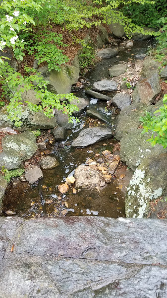 - On the first morning – I photographed the stream as I crossed the entrance bridge. The rain was light, so the water was not high…but the color of the rocks normally dry above the surface of the water is more vivid since they were wet from the rain.