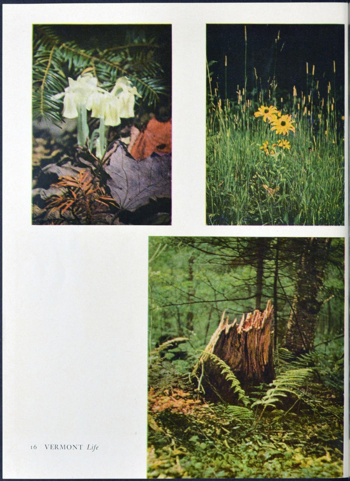 - Vermont Department of Tourism and Marketing. Vermont Life. Montpelier: Vermont Development Commission. A quarterly publication available from Internet Archive here.