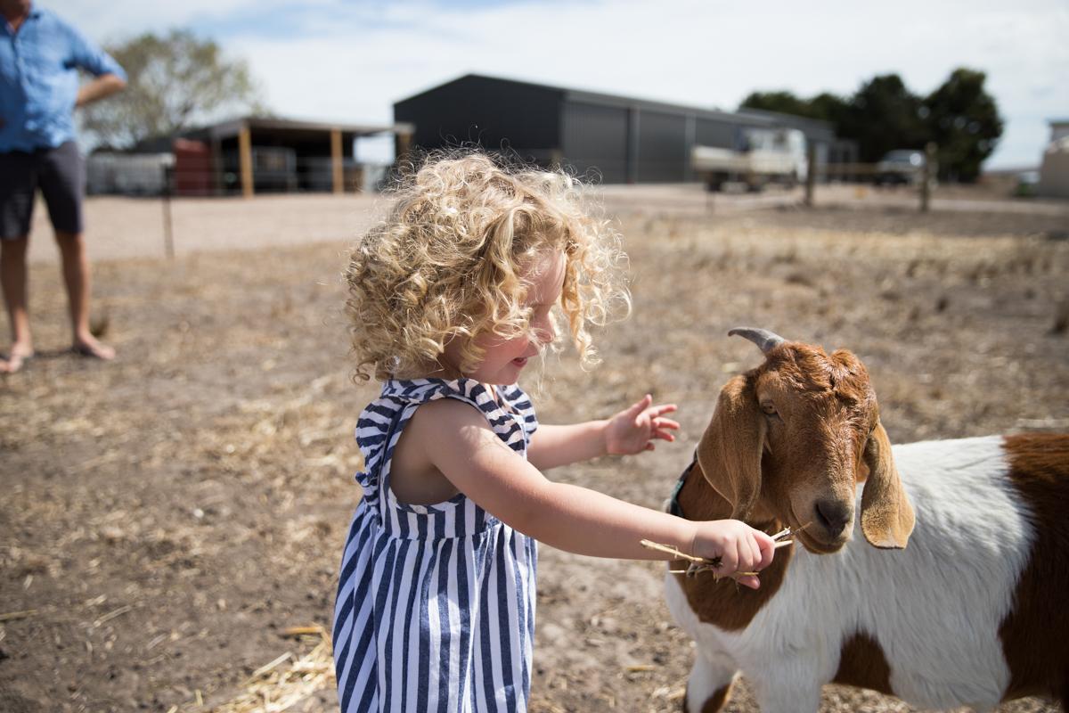 Lauren McAdam Photography Geelong jan juc torquay newtown belmont family newborn photographer-7500.jpg