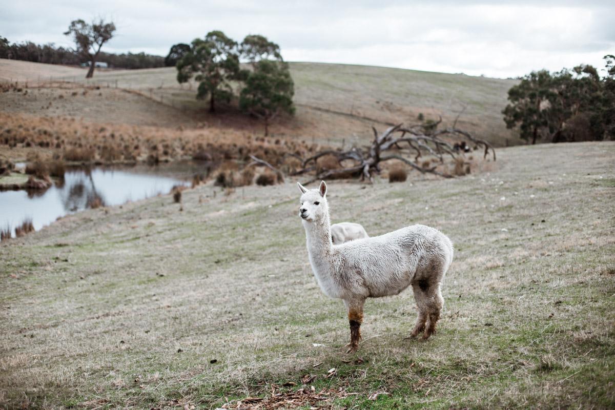 Lauren McAdam Photography Geelong jan juc torquay newtown belmont family newborn photographer-7250.jpg