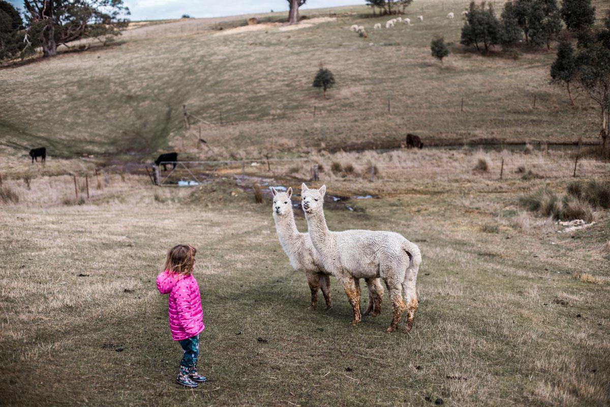 Lauren McAdam Photography Geelong jan juc torquay newtown belmont family newborn photographer-7254.jpg