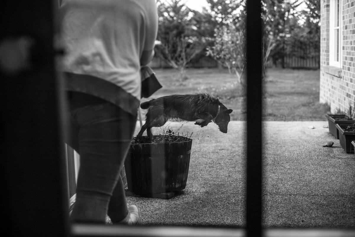 Lauren McAdam Photography Geelong jan juc torquay newtown belmont family photographer-30.jpg