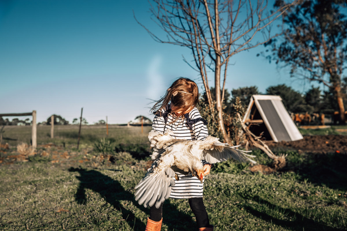 Chicken flapping while being held by a little girl on farm Lauren McAdam Photography Geelong torquay newtown armstrong creek moriac family photographer-19.jpg