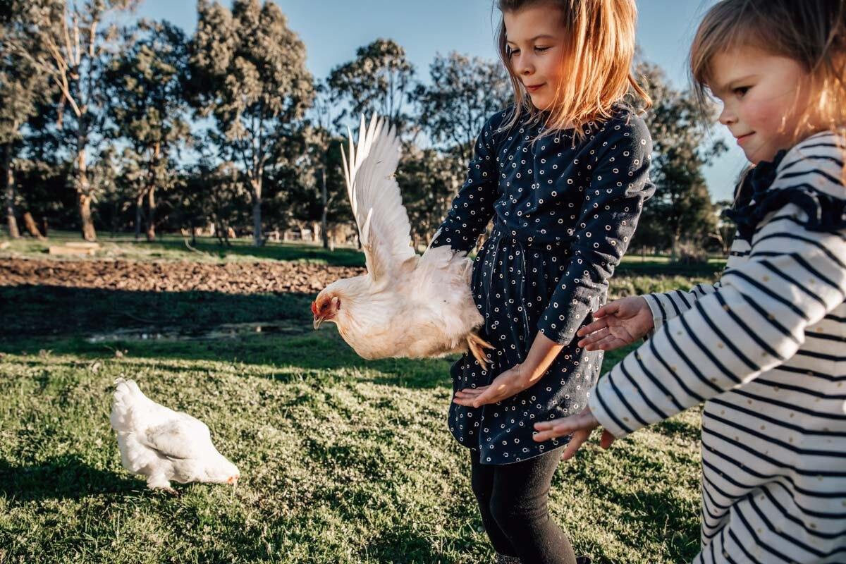 Chicken flapping wings being held by a girl Lauren McAdam Photography Geelong torquay newtown armstrong creek moriac family photographer-18.jpg