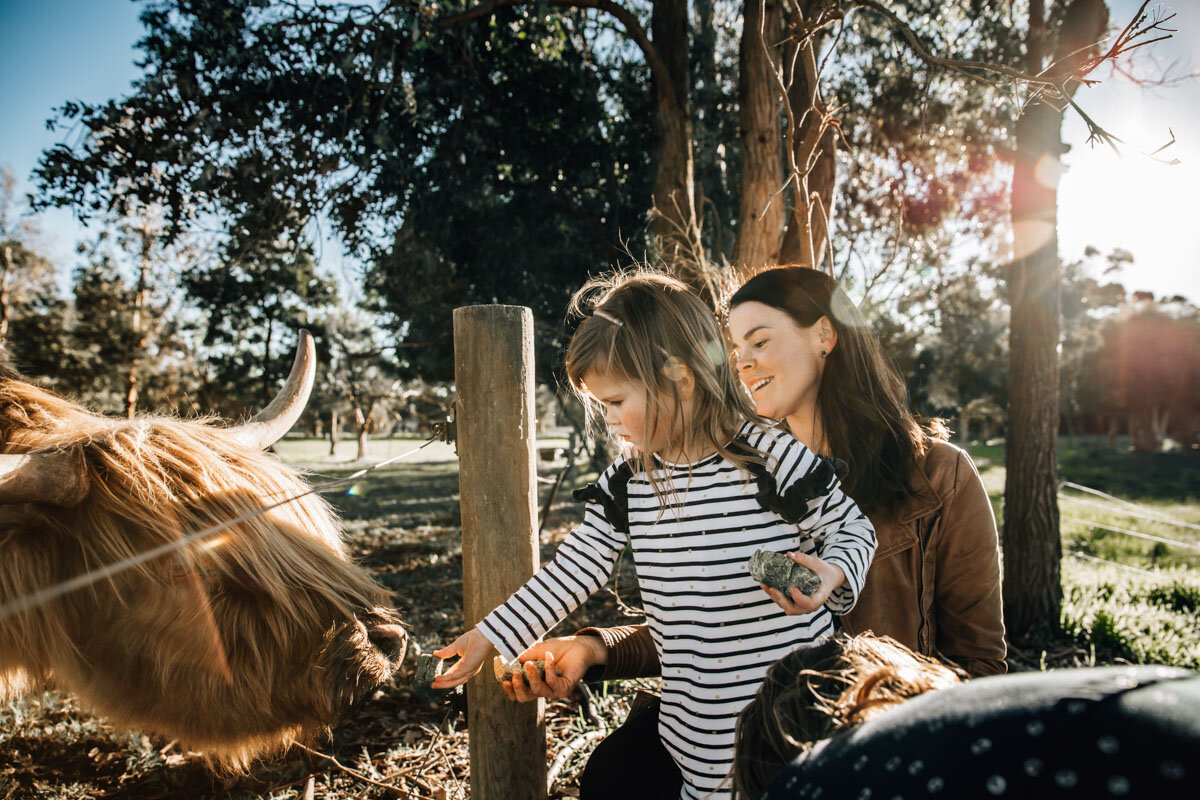 Mum and daughter feeding Scottish Highland cattle on a family farm Lauren McAdam Photography Geelong torquay newtown armstrong creek moriac family photographer-9.jpg