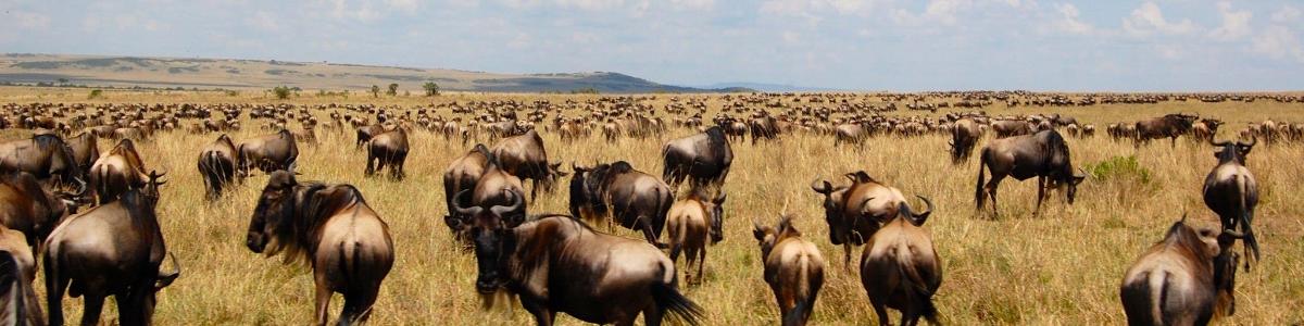 Maasai Mara Kenya, Porini Gamewatchers, photo by Yvette Jong