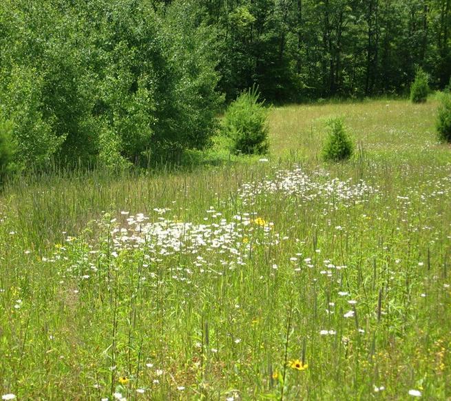 greensprings_meadow.jpg