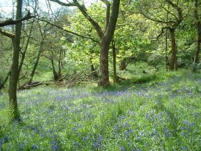 Photo: Lancashire Preserve