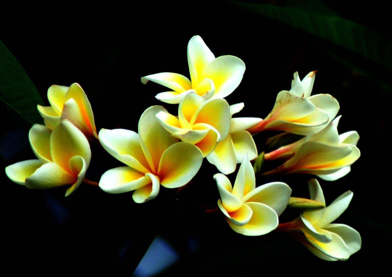 Swaminathan.jpg
