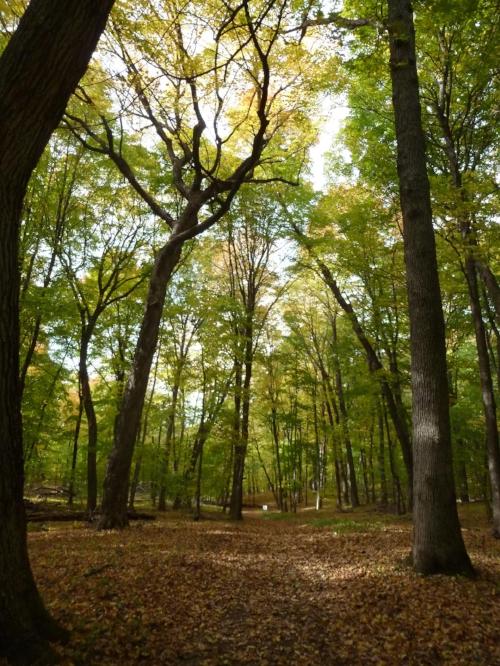 Forest landscape.jpg