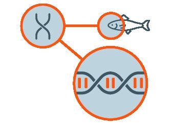 Hatch_About_Genetics.png