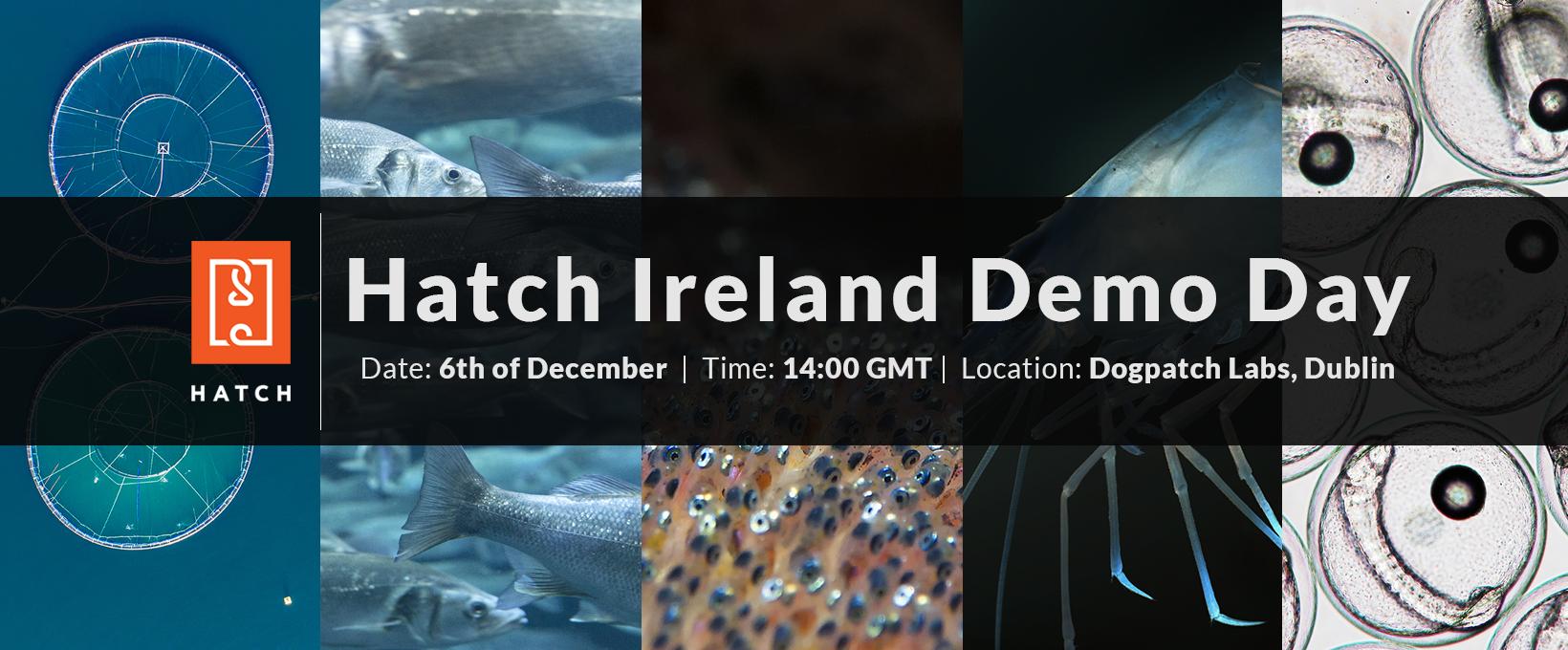 hatch_ireland_demo_day.png