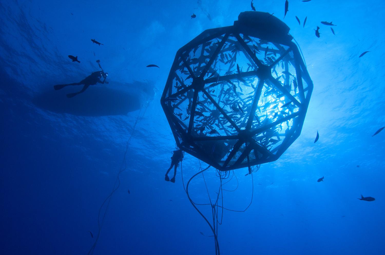 Aquaculture -