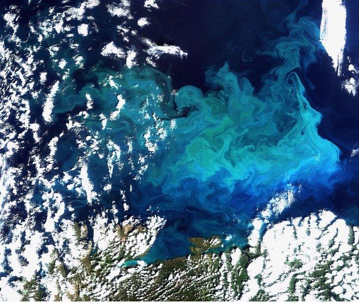 Algae bloom off the Scandinavian coast