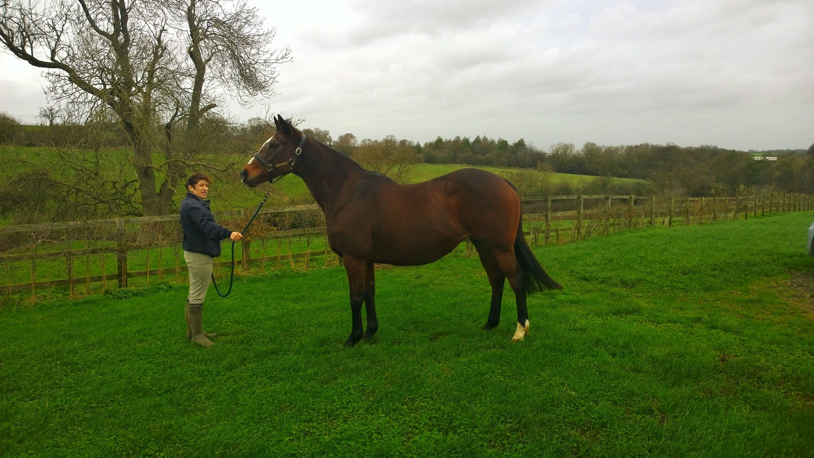 Hanella by Galileo out of Strutting having her first photo taken at Culworth Grounds