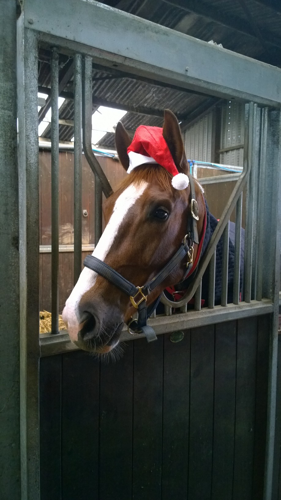 Nutwood Mimic getting ready for Christmas