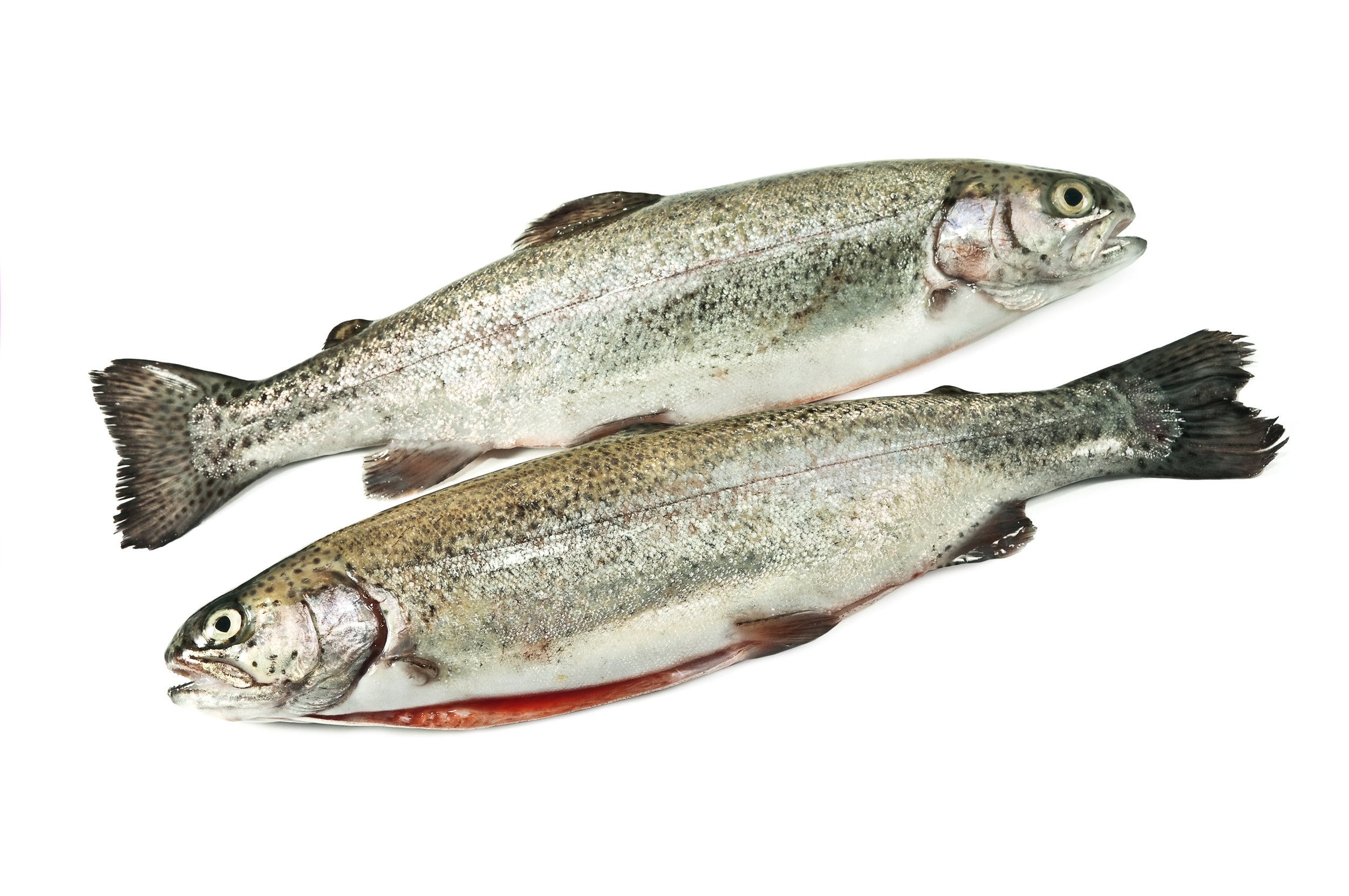 Rainbow Trout                    Recipes  -