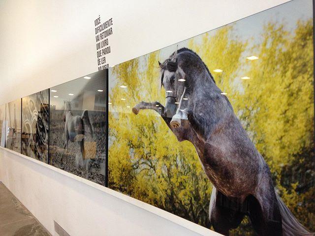 Exhibition produced by @innframe for @raphaelmacekgallery  Photographer @raphaelmacek  www.innframe.com  contact@innframe.com  #artdelivery #fineartprint #fineart #artinstallation #print #cottonpaper #photopaper #canvas #framing #glass #metalprint #decor #photography #architecture #photokina #exhibition #archivalprint #artmiami #florida #photooftheday #frameshop #framer #uvprint #customframing #photoframe #artbasel #parisphoto #artnewyork #frieze #photo