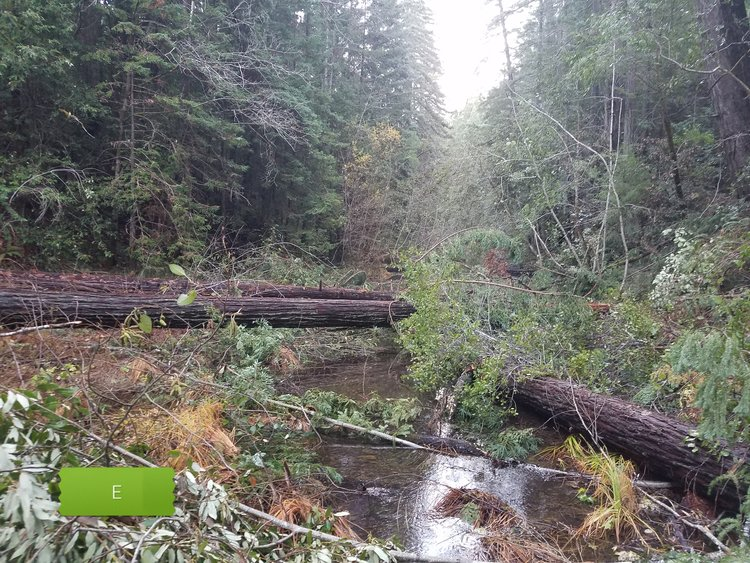 Removed fish passage barriers and reconnected stream channels.Three projects; 1 stream mile made accessible for migrating salmon and steelhead.Watersheds: Big River, Eel River, Van Duzen. -