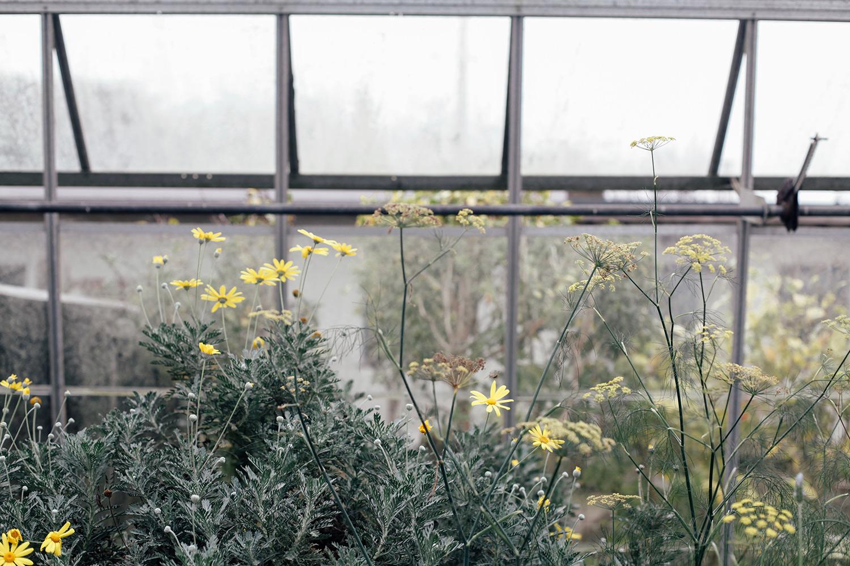 Many-Mavens-Potager-yellow-flowers-Tor.jpg