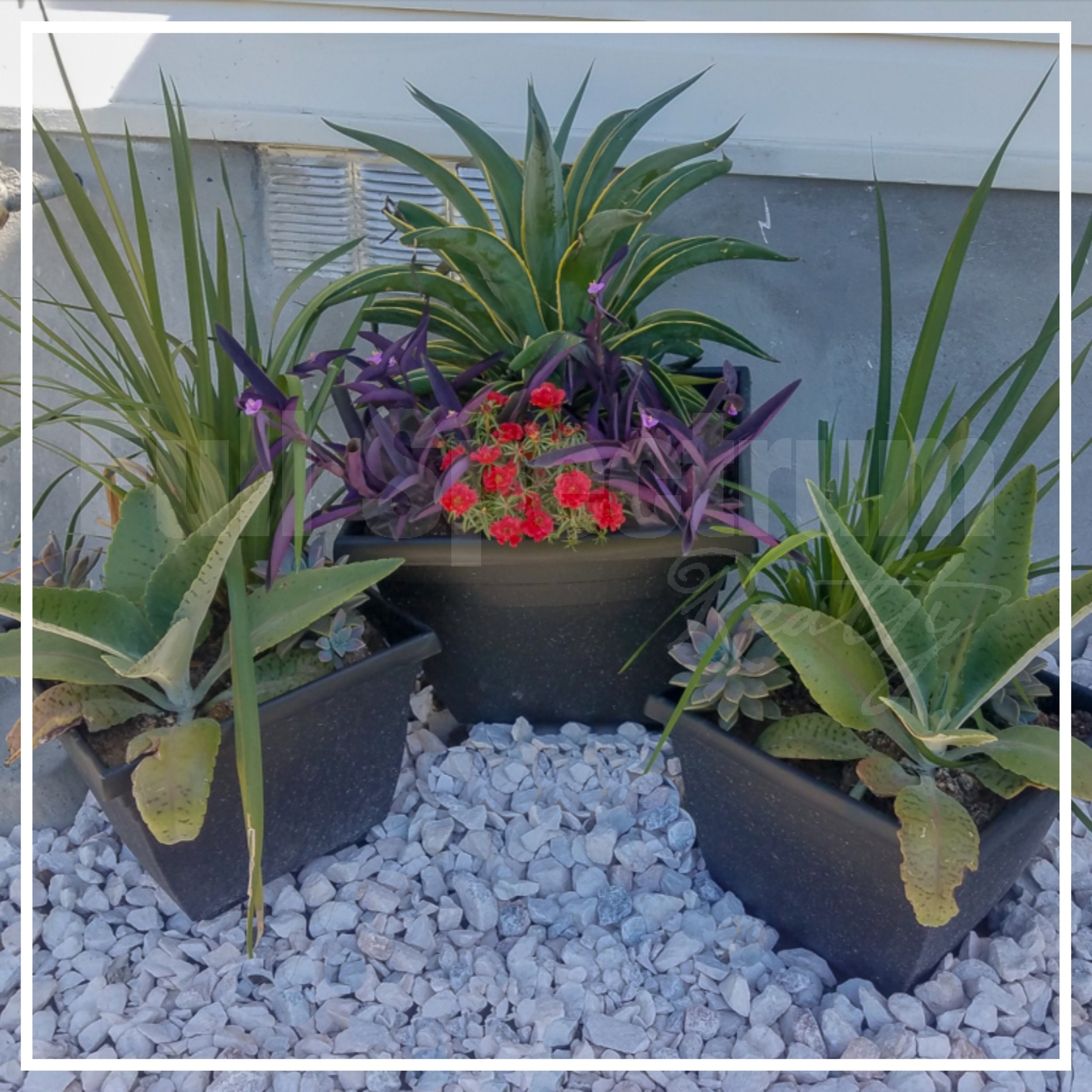 potted plants design